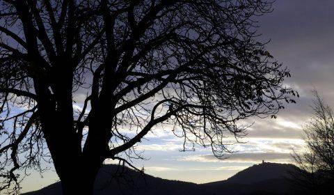 arbre devant le château du Haut-Koenigsbourg