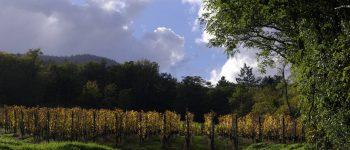 chemin vers les vignes