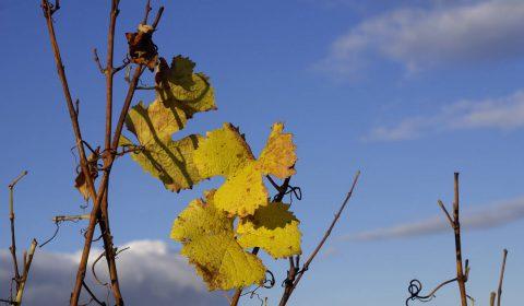 feuilles de igne dans le ciel