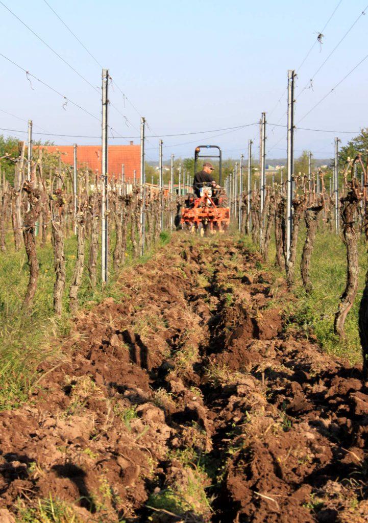 labour d'une rangée de vigne